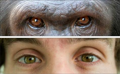primate-human-eyes-1